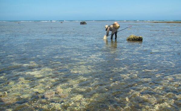 戦中も戦後も、島人の命を救ったのはこの海からの恵みだった。きのうもタコやシャコガイ、ハリセンボン、私でも魚が手づかみできた。間も無く埋め立てられる辺野古の海。子孫からこの海を奪う権利があるのだろうか?私たちの世代は重罪だ。#標的の村 http://t.co/ClPOKA0Hll