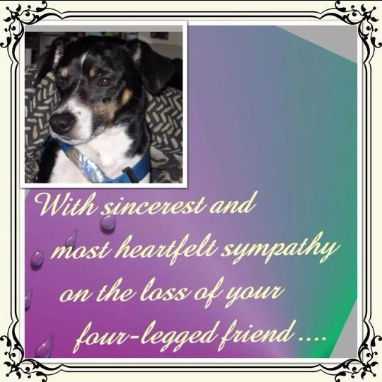 @TheRealXPac Rest in Peace, Gremlin!  2002-2014  (Your Doggie is a Superstar in Heaven now!)  XOXO http://t.co/XRrUTLhYmC
