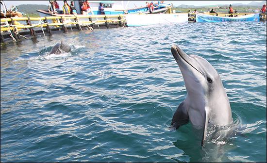 '제돌이의 꿈은 바다였습니다' 제주시 구좌읍 김녕리 해안에 설치된 표지석에 새겨진 글귀입니다. 제돌이 방류 후 1년, 제돌이와 친구들은 어떻게 지내고 있을까요? http://t.co/MT2b0RRYkV http://t.co/0asChvGFl1