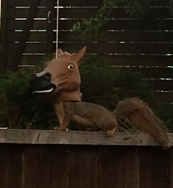 Okay, I'm sorry I doubted when they brought home the horse head squirrel feeder. http://t.co/jS1CdO7qB5
