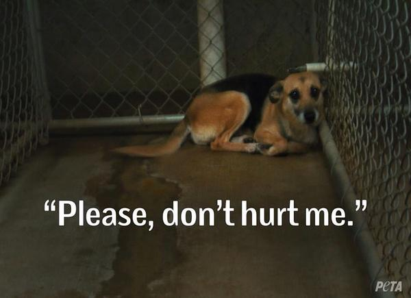 Report Animal Abuse #neverbesilent http://t.co/jtvL06dm3M