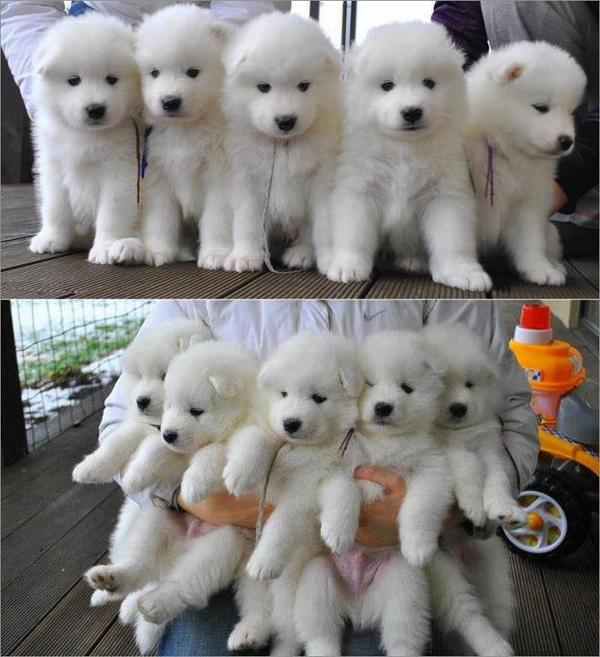 """How many puppies do you want?""  ""All of the puppies. Bring them to me."" http://t.co/4m8Lx7hDGg"