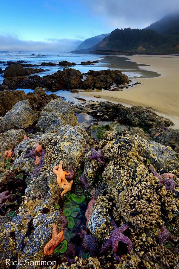 A favorite from my Oregon Coast Photo Workshop. See more: http://t.co/KJwgdu1k65 http://t.co/TTaWopeeWc