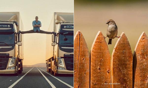 El pájaro VAN-DAMME http://t.co/8VCHP6XSNG