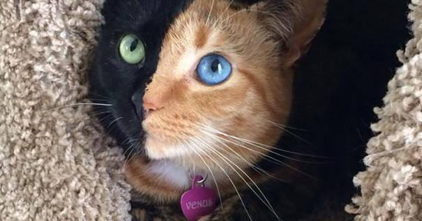 17 Photos Of A Cat Unlike Any You've Ever Seen. She's Different In A Beautiful Way ---> http://t.co/z1CMAJpoxT http://t.co/GW05S2TV3C