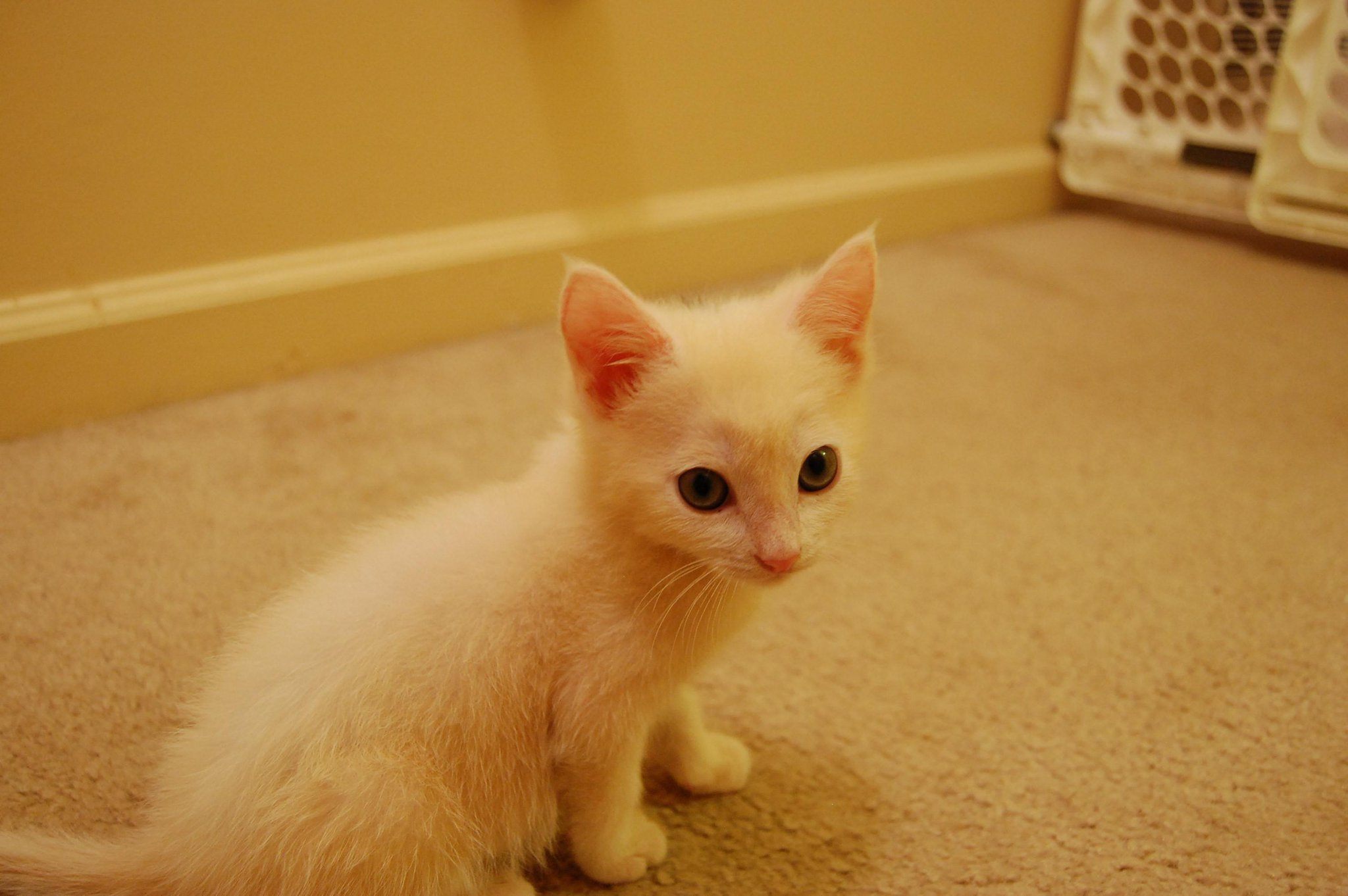 Dot, in his wee-kitten years. http://t.co/FvLBQrYp2S