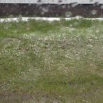 What the hail at @BootsandHearts http://t.co/GuOwMuaJVx