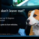 Dont leave your pets in your car. http://t.co/WGKSAC7FSK #yyc #yyccats #yycdogs Pls RT. http://t.co/yq3MTmKjAu