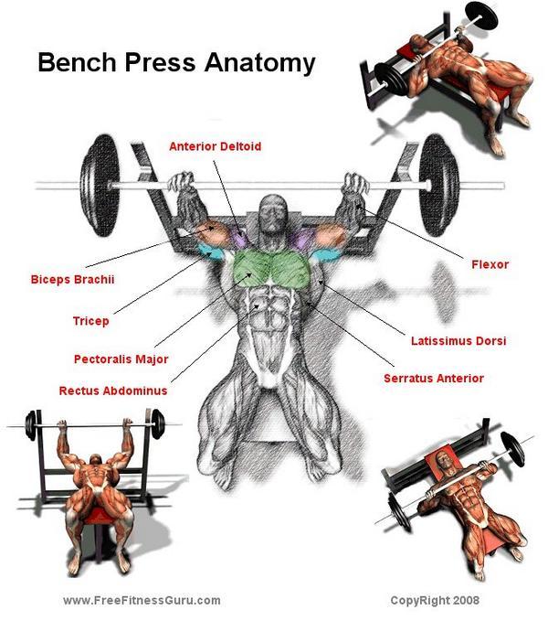¿Qué músculos trabajas en el press de banca? Te lo contamos en esta imagen http://t.co/sF3yNyrGrb