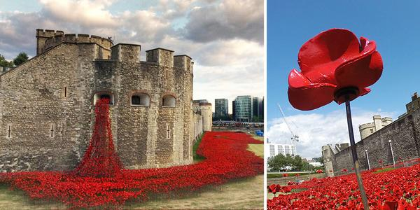 888,246 Poppies Pour Like Blood From The Tower Of London To Remember The Fallen Soldiers O... http://t.co/B41LIF5SVT http://t.co/0zvxyB1GyT