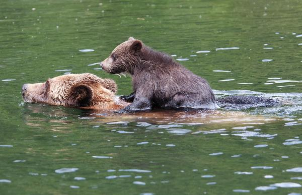 This beautiful weather in #BritishColumbia calls for a swim! Have a refreshing #WildlifeWednesday everyone! http://t.co/llAJRZj58U