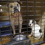 Use of social media to promote animal adoptions causes problems for Norman shelter http://t.co/0J72gVNj0J http://t.co/SIQD8XnqTo