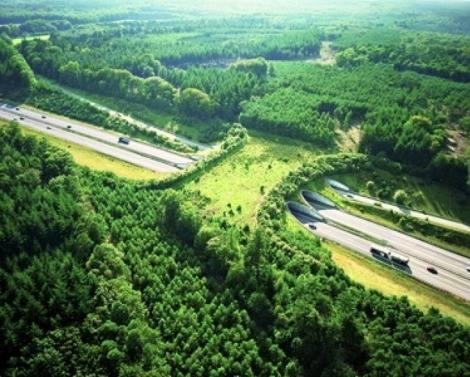 In Holland they build natural bridges for animals to cross the highway without risking their lives. http://t.co/7hvtqFwBCj