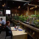 Co-working spaces expand into niche markets, and #marijuana is one of them http://t.co/p8m1MPjyoO http://t.co/mCfibCbyDO