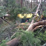 RT @abcnews: A train crashes into fallen gum tree as wild winds cause havoc in Adelaide http://t.co/RFV4QQqP2v http://t.co/8bMsrKxggF