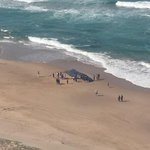 RT @djwesreddy: The Whale that washed up on Toti beach now @ecr9495 http://t.co/37ig1JWtbR