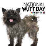 "RT @wbir: Happy National Mutt Day! Its a day to celebrate all ""mutts"" & promote adoption! Tweet your pics to #WBIRMutts http://t.co/9E2bweUZn9"