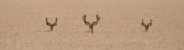 Neat photo: One of our employees spotted this trio in a field in Malheur County. http://t.co/thFlDh2OsO