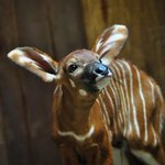 RT @potterparkzoo: Dont forget YOU can help name this newest bundle of joy: http://t.co/fjTKk31Tob #LoveLansing #ZooYouKnow http://t.co/fNSgyOwHll