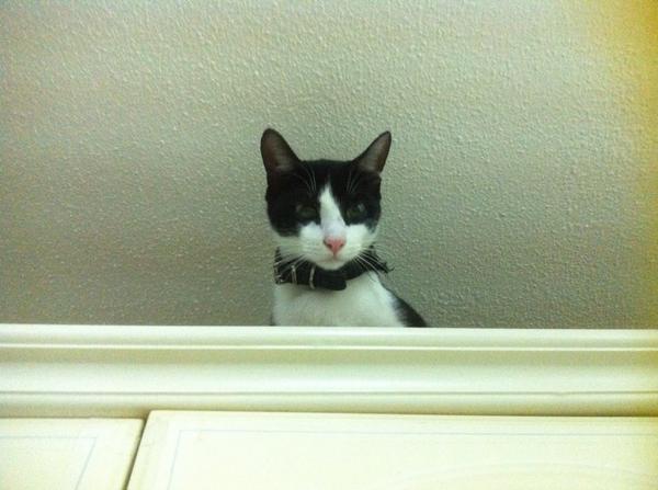 http://t.co/fl2HZlyo1E necessito de ajuda para encontrar este pequeno tonto!... :( http://t.co/zCocsy6UU0