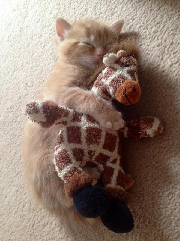 A cat hugging a giraffe http://t.co/DZpa6IHSin