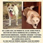 Se Busca en @LaSerena_Chile @SushisJo @rominasaoficial RT please :( http://t.co/4qvBAWBmGS