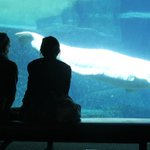 ICYMI: Vancouver park board bans aquarium from breeding whales and dolphins http://t.co/32vhsUVLCM http://t.co/obIUdsKIxm