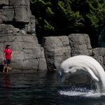 RT @CTVVancouver: #Breaking: Vancouver park board has voted unanimously to ban Vancouver Aquarium from breeding cetaceans. http://t.co/aLGUKjj5Fv