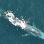 RT @Independent_ie: #VIDEO - Air corps catches giants of the sea having a whale of a time: http://t.co/tx1bksN5oi http://t.co/GFuNRyxhxM