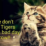 UST Growling Tigers vs the still winless UP Maroons tomorrow 2PM @ the Araneta Coliseum #goUSTe (© to owner) http://t.co/EJ7DQdn9io