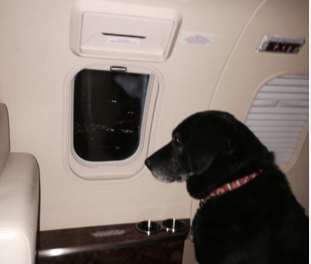 Elderly Lab dumped in a Kansas shelter adopted by heiress who flies dog in a jet to new home http://t.co/4THJvs1bpb http://t.co/o3rwuthMYu