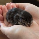 A newly born kitten. She melts my heart, so cute!!!! . http://t.co/znPGfdxdIo