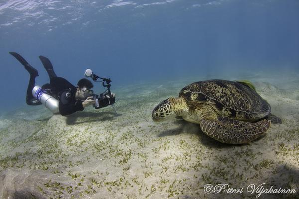 Pic of the Day: green turtle posing in Marsa Alam, Egypt by Petteri Viljakainen http://t.co/zb3pinDGHR http://t.co/mxFYZXX6ff