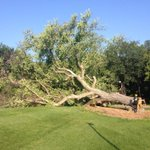 And just like that, Old Grandma Elm was cut down #cbcmb http://t.co/hzdLj6c3Kr