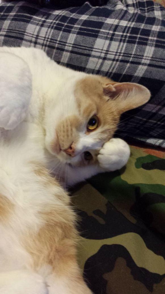 Da Most Beautiful Cat Goddess Afena in da universe is HEEEEEERRRRRREEEE FINALLY!  #tenforward http://t.co/aJTdeH04Ql