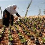RT @YasminMogahed: Palestinian woman plants flowers in empty tear gas canisters.Could learn 1000 lessons from this image #freepalestine http://t.co/ElvloN94b7