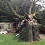 Approx 7 foot diameter oak fell on 2 houses 2 cars. Minor injuries. http://t.co/paFCmoidsA