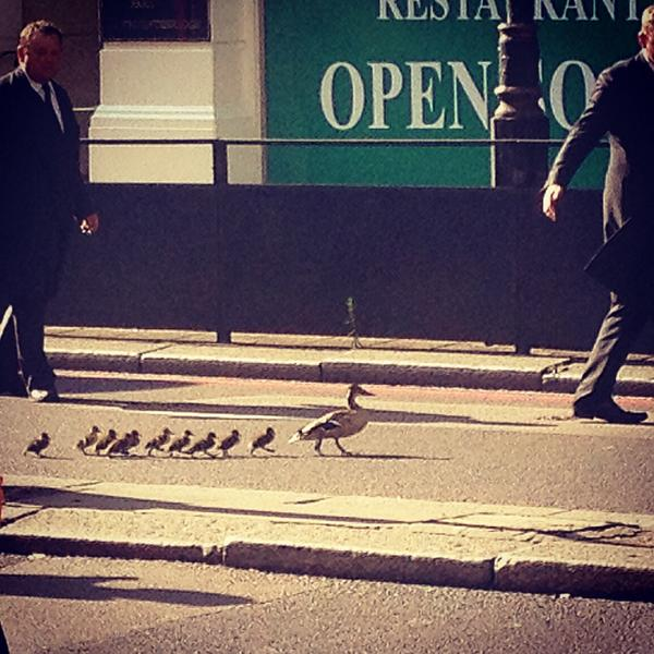 Berkeley Doormen stop the traffic in Knightsbridge for mother duck and brood #doormangooddeed #fivestarservice http://t.co/D80QaikK09