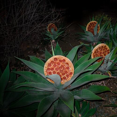 Para el que nunca ha visto la planta de donde se cosechan las pizzas http://t.co/trCUZJJgJP