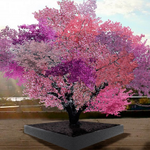 RT @TimesLIVE: Artists hybrid tree bears over 40 different fruit http://t.co/TGzN6RbkoS http://t.co/W3goqJjq8h
