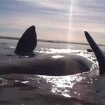 Incredible video shows two kayakers being lifted out of water by a whale http://t.co/GHZvNk8CGj http://t.co/eM1Xr6M5XA