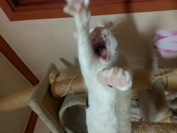 캣타워 망가뜨려서.... 미안하다!!!!!!!!!!!! http://t.co/DUxMx7d8sg