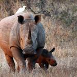 South Africa rhino poacher jailed for 77 years http://t.co/dKuaAwNs6q http://t.co/PFiblUL3JB