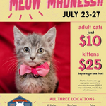 No @kcpetproject is busting at the seams with Kitty Cats! They make Purr-fect companions. #1MC http://t.co/7lCbE8fHVo