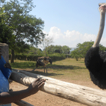 Beatrice Lubega dared to keep wild ostriches, she shares her story: http://t.co/5Tzly84QvP #SeedsOfGold http://t.co/EmkWuTKFGa