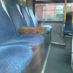 RT @JakeAReid: Fox news update. #busfox RT @JohnHuaCTV: Heres another angle of the sleeping #fox @OC_Transpo @ctvottawa http://t.co/Oa9hoJTIvl