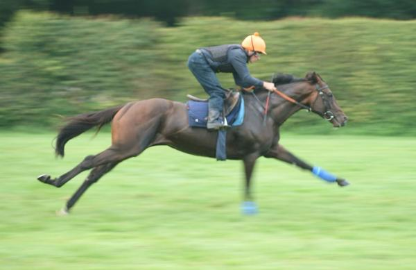 Telescope in full flight this morning on the gallops! :) http://t.co/D8I5Ojy57v