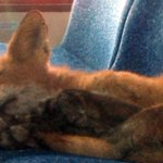 RT @WatchCTVNews: What does the fox dream? Critter caught napping on an Ottawa city bus: http://t.co/3uNIasPiQz http://t.co/oqrdBGdhpa