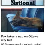 Ok guys- who else loves #busfox Im dying of cute! Squeeeeeeee http://t.co/Mpcp2HYcyI