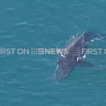RT @9NewsGoldCoast: #BREAKING: Rescue crews have managed to free a whale that was tangled in a net off the Gold Coast. #9News http://t.co/jifzRbJYPu